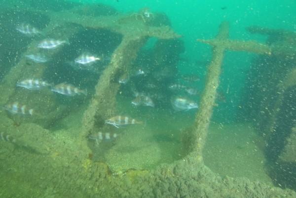 U1195 Submarine